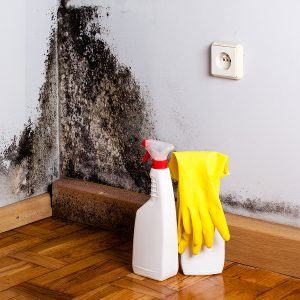 black mold on the walls of someone's home