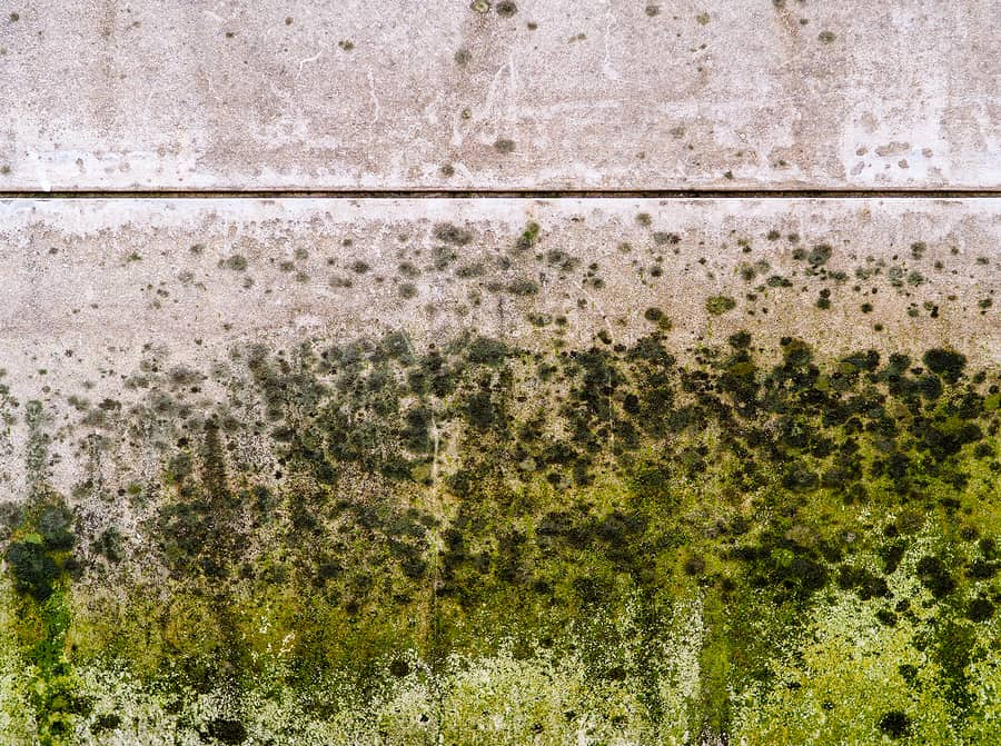 mold developing inside a basement